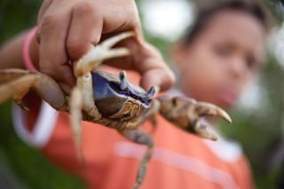 Foto ilustrando um garoto segurando um caranguejo com sua mão direita.