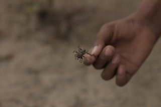 Foto ilustrando uma mão de uma criança segurando uma aranha.