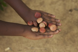 Foto ilustrando uma mão de uma menina negar, com as partes de cima da mão segura várias sementes.