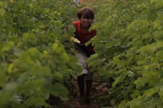 Foto de um garoto brincando e correndo em meio a uma plantação.